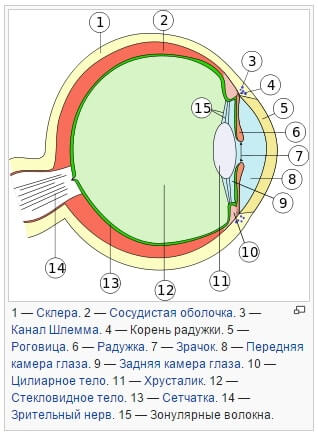Человеческий глаз и работа на компьютере